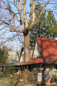 Circle house with tree through porch roof